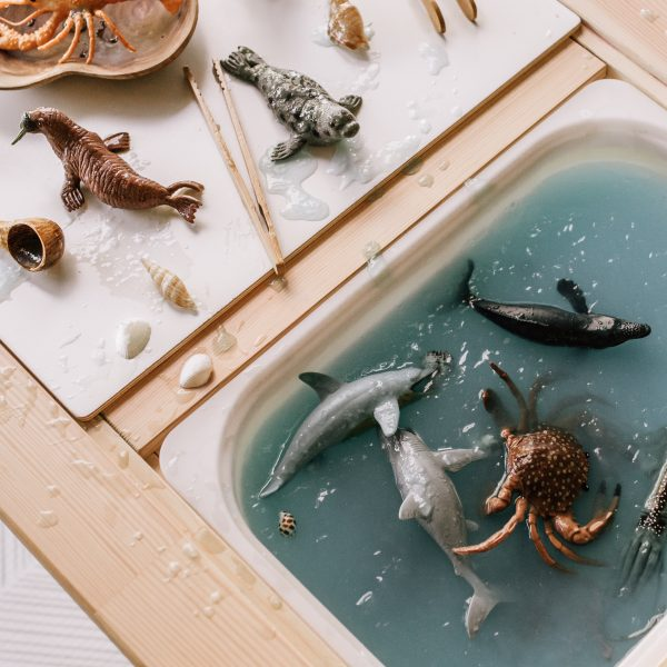 aquatic collection