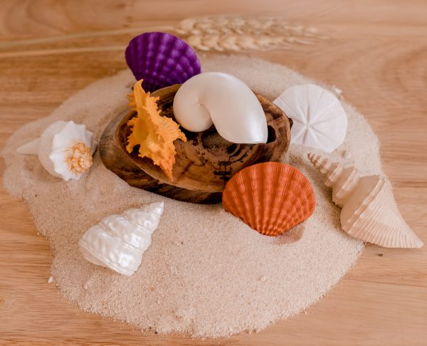 seashells toob